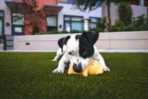 5 Common Dog Illnesses That Are Impacted by Nutrition