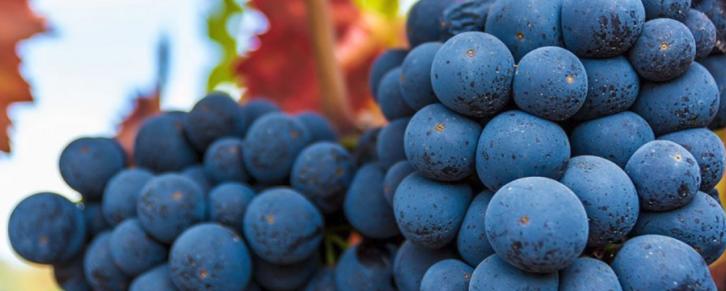 winecountrys